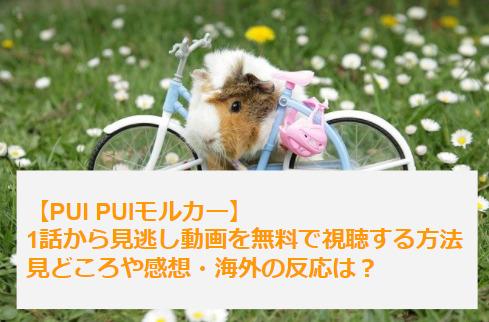 PUI PUIモルカー